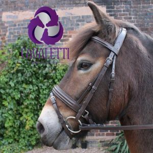 Cavaletti Collection Discovery Flash Bridle